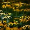 Sun Dancers by Timothy Bischoff