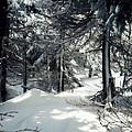 Sun Dappled Snow by James Aiken