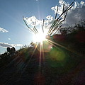 sun by David S Reynolds