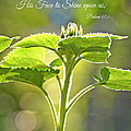 Sun Drenched Sunflower With Bible Verse by Debbie Portwood