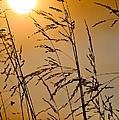 Sun Flood by U Schade