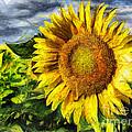Sunflower Drawing  by Daliana Pacuraru