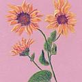Sun Flowers by Dawn Marie Black