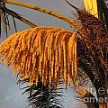 Sun Glowing Palm by Sheryl Young