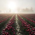 Sun In Fog And Tulips by Yoshiki Nakamura