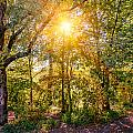 Sun In The Autumn Forest by Alain De Maximy