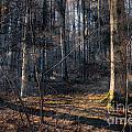Sun In The Forest by Jutta Maria Pusl