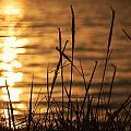 Sun Kissed  by Leticia Latocki