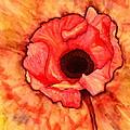 Sun Kissed Poppy by Terry Fleckney