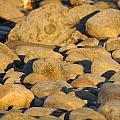 Sun Kissed Rocks by Anastasia Konn