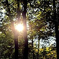 Sun Kissed Trees by Maria Urso