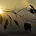 Sun Leaves by Guido Montanes Castillo