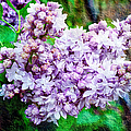 Sun Lit Lilac The Sweet Sign Of Spring by Andee Design