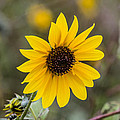 Sun Of A Cloudy Day by Renny Spencer