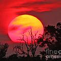 Louisiana Sunset On Fire by Luana K Perez