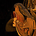 Sun On Leather Horse Saddle In Tack Room Equestrian Fine Art Photography Print by Jerry Cowart