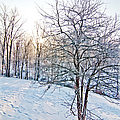 Sun Over A Snowy Day by Shirley Tinkham
