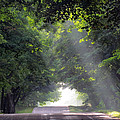 Sun Rays On Waters End Road by David T Wilkinson