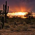 Sun Rays Over The Sonoran Desert  by Saija  Lehtonen