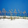 Sun Sand Surf by Mary Marsh