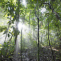 Sun Shining In Tropical Rainforest by Cyril Ruoso