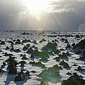 Sun Shining On A Field Of Lava Rocks by Thomas Kokta