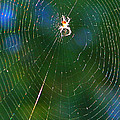 Sun Spider In Rainbow Web by April Dunlap