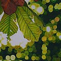 Sun Through Horse Chestnut Leaves by Grant Ham