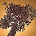 Sun Tree by John Cardamone