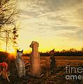 Sun Worshipers by Jutta Maria Pusl