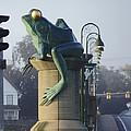 Sunbathing Frog by David Gonzalez