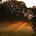 Sunbeams And Fog by Karen Beasley