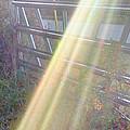Sunbeams Over Gate by Nadia Korths