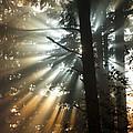 Sunbeams Through Trees by John Shaw