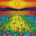 Sunburst Poppies by John  Nolan