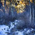 Sundance Aspen Trail by Douglas Barnard