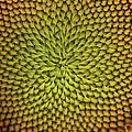 Sunflower Sundial by Britt Runyon