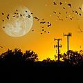 Sundown Fantasy Orange by Brian Wallace