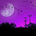 Sundown Fantasy - Violet by Brian Wallace