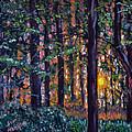 Sundown In Woods by Stan Hamilton
