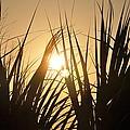 Sundown Through The Grass by Bill Cannon