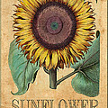 Sunflower 1 by Andrew Fare