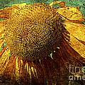 Sunflower 2 by Susanne Van Hulst