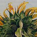 Sunflower 3 by Diane Ziemski