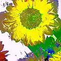 Sunflower 30 by Pamela Cooper