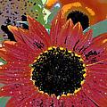 Sunflower 31 by Pamela Cooper