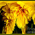 Sunflower Abstract 1 by Rose Santuci-Sofranko