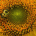 Sunflower An Bumble by Brittany Perez