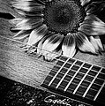 Sunflower And Guitar by Dianne Phelps