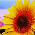 Sunflower At Beach by Eric  Schiabor